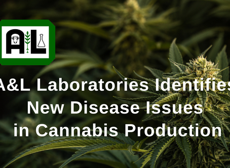 A&L Laboratories Identifies New Disease Issues in Cannabis Production