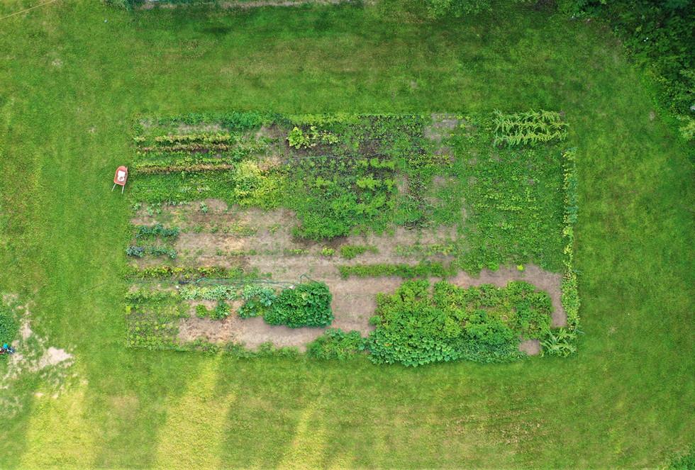 First Garden 2021