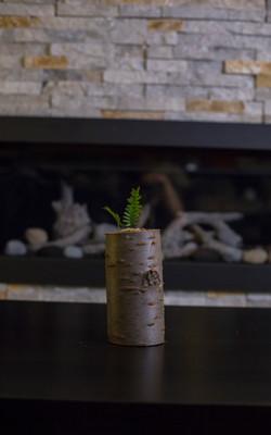 Fern Planter