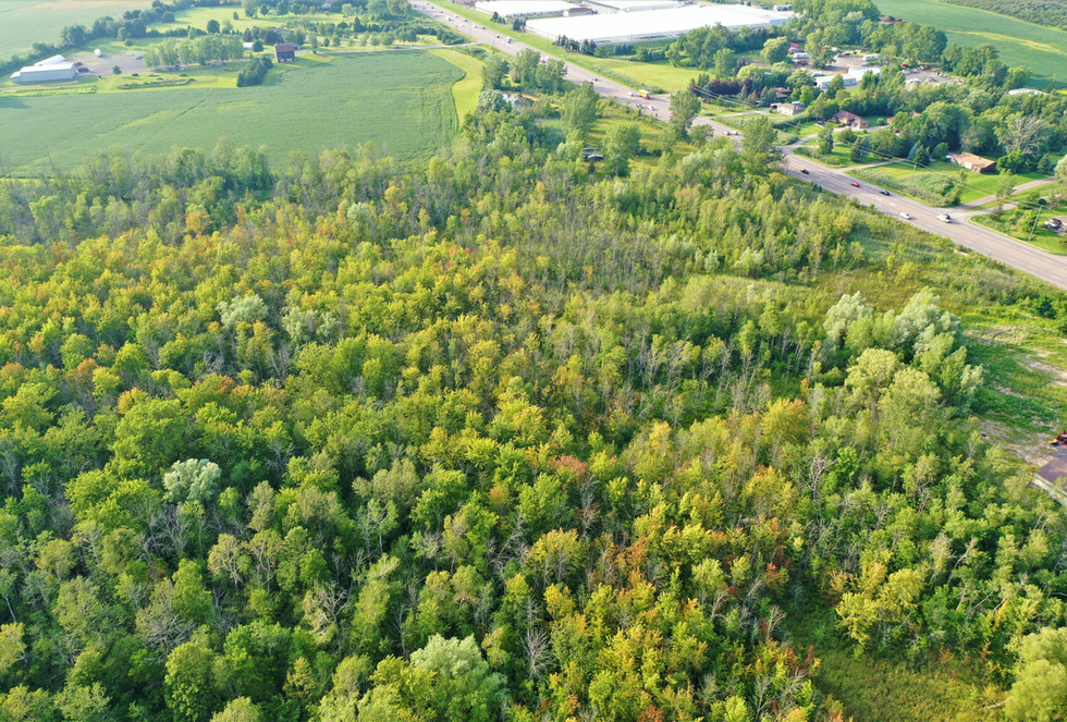 Our Woodlot and Wetland