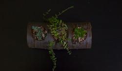 Cherry Wood Succulents