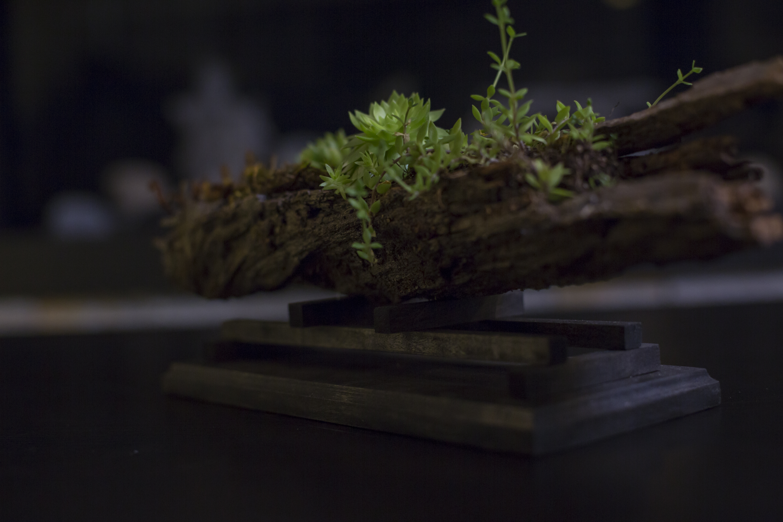 Muskoka Planter
