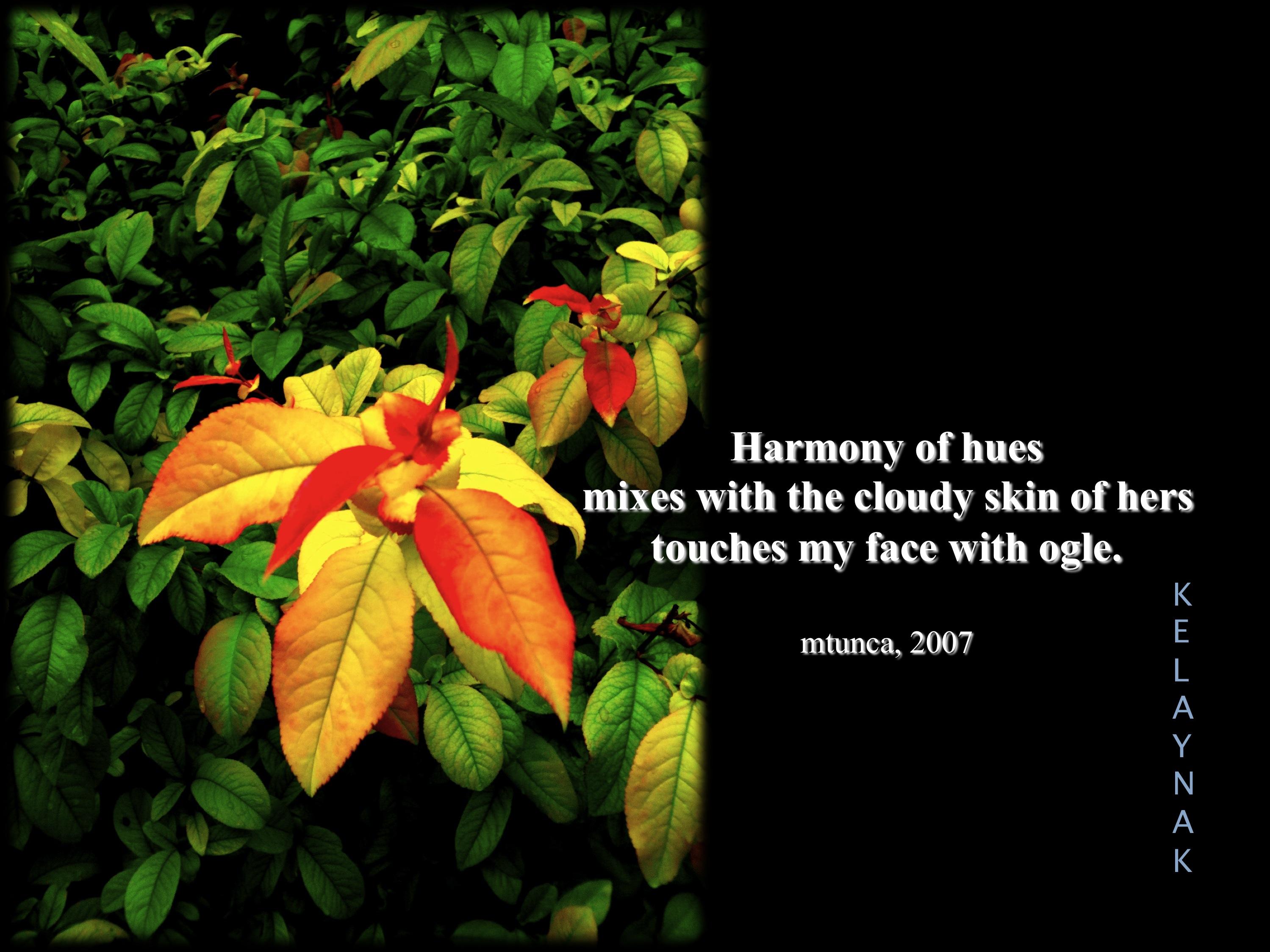 HARMONY OF HUES-RENKLERİN UYUMU