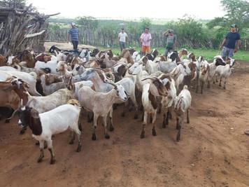 Procase entrega equipamentos e animais a projetos produtivos no semiárido paraibano