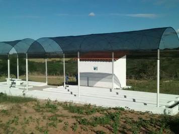 Cinco viveiros de mudas são implantados em comunidades rurais apoiadas pelo Procase