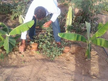 Unidade de Aprendizagem do Procase desenvolve irrigação através de potes de barro