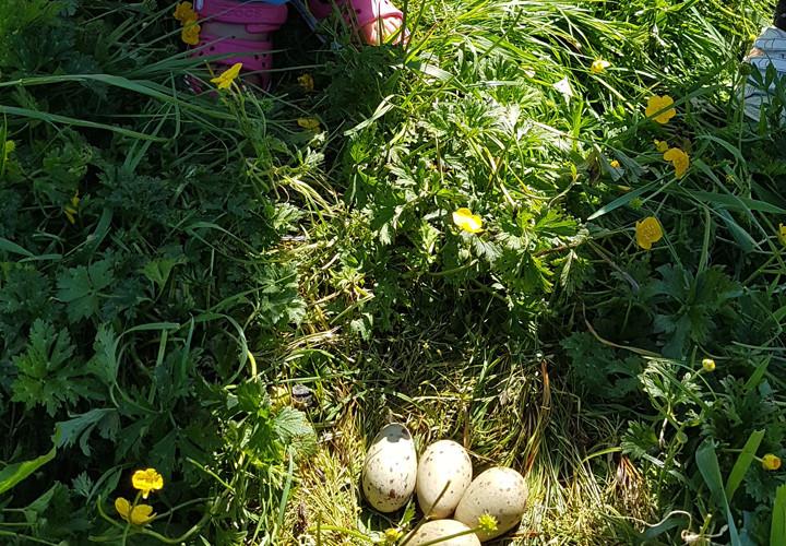 country-kids-eggs.jpg