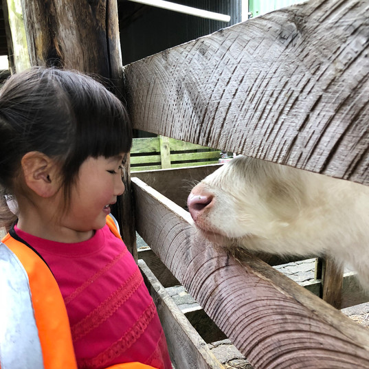 country-kids-girl-goat-nose.jpg