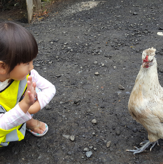 country-kids-chicken.jpg