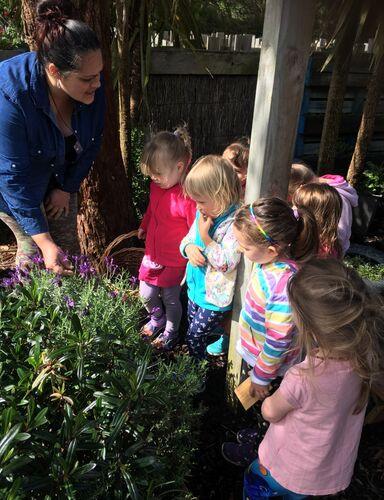 lavendar nurture with nature.jpeg