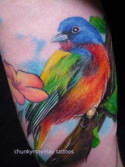 littlebird tatt002013.JPG