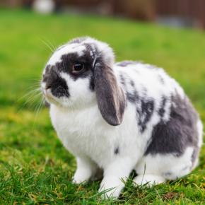 Cat & Rabbit Clinic's tips for getting through your rabbit's teenage years