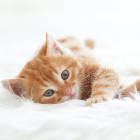 Bringing up a new kitten