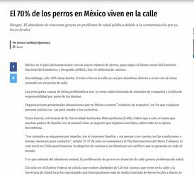 EL 70% DE LOS PERROS EN MÉXICO VIVEN EN LA CALLE