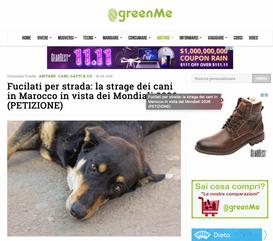 Fuciliati per strada: la strage dei cani in Marocco