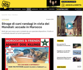 STRAGE DI CANI RANDAGI IN VISTA DEI MONDIALI: ACCADE IN MAROCCO