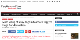MASS KILLING OF STRAY DOGS IN MOROCCO TRIGGERS HUGE CONDEMNATION