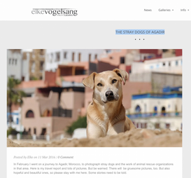 THE STRAY DOGS OF AGADIR