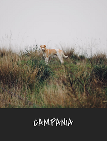 6.campania.png