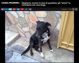"""BAGHERIA, MUORE IL CANE DI QUARTIERE: GLI """"AMICI"""" LO RICORDANO CON UNA TARGA"""