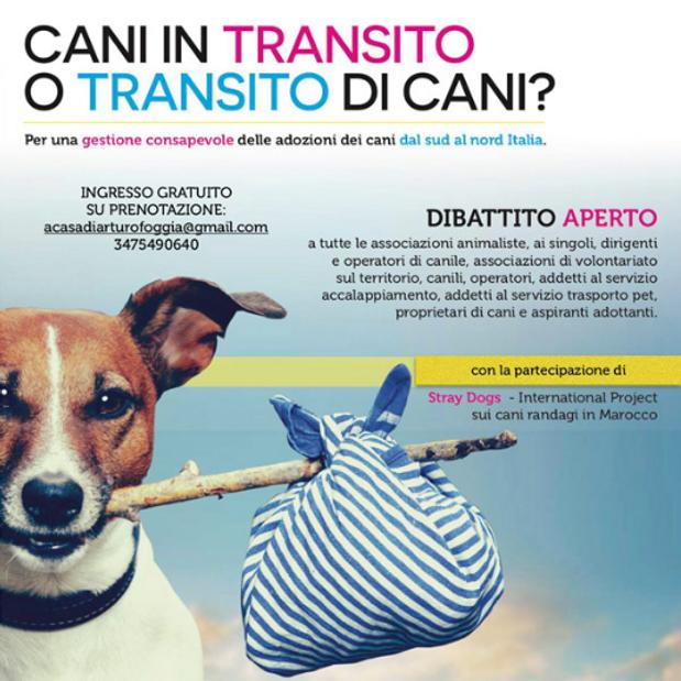 Cani in transito o transito di cani
