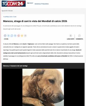 MAROCCO, STRAGE DI CANI IN VISTA DEI MONDIALI DI CALCIO 2026