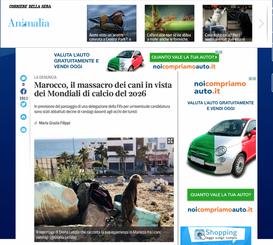 MAROCCO, IL MASSACRO DEI CANI IN VISTA DEI MONDIALI DI CALCIO DEL 2026