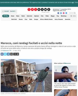 Marocco, cani randagi fucilati e uccisi in strada