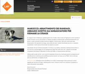 MAROCCO: ABBATTIMENTO DEI RANDAGI. ABBIAMO SCRITTO ALL'AMBASCIATORE PER FERMARE LA STRAGE