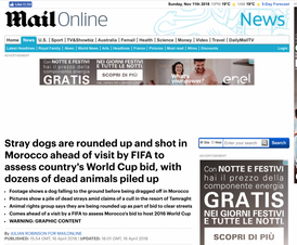 STRAY DOGS ARE ROUNDED UP AND SHOT IN MOROCCO AHEAD OF VISIT BY FIFA TO ASSESS COUNTRY'S WORLD CUP BID, WITH DOZENS OF DEAD ANIMALS PILED UP