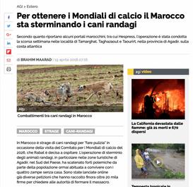Per ottenere i Mondiali di calcio, il Marocco sta sterminando i cani randagi
