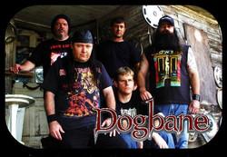 Dogbane