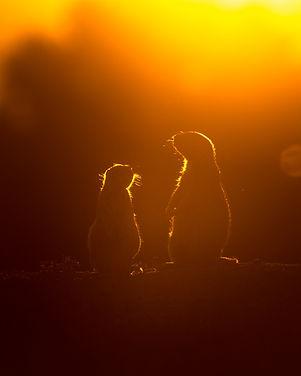 Prairie dogs 2019.jpg