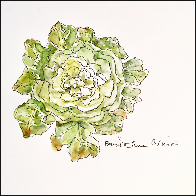 Ornamental Cabbage 5x7