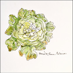 Ornamental Cabbage 5x7