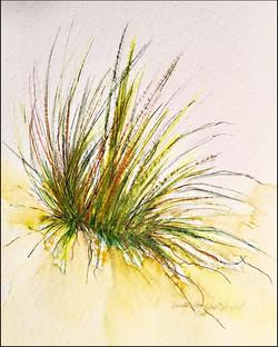 Seagrass 5x7