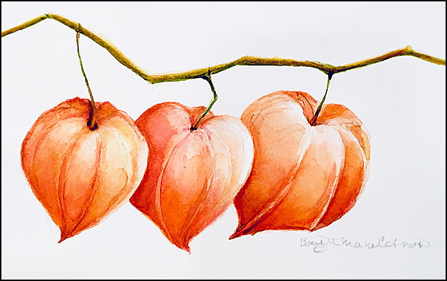 Three Chinese Lanterns 4x6 (sold)