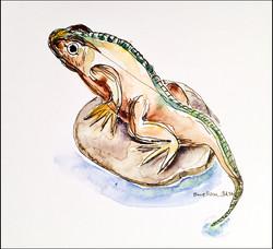 Lizard 5x7