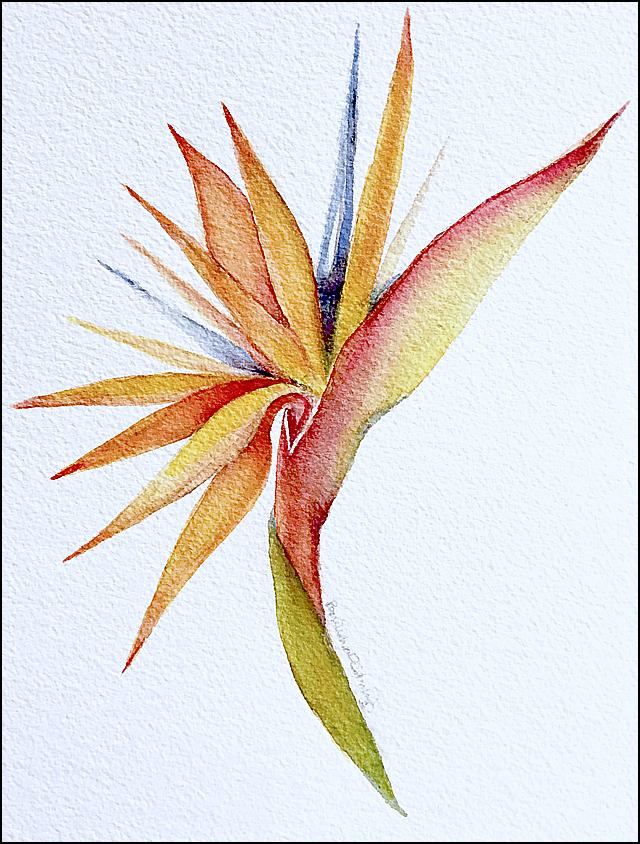 Bird of Paradis 9x12