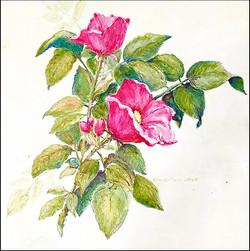 Beach Plum Roses 12x12 (sold)