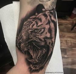 tiger chino