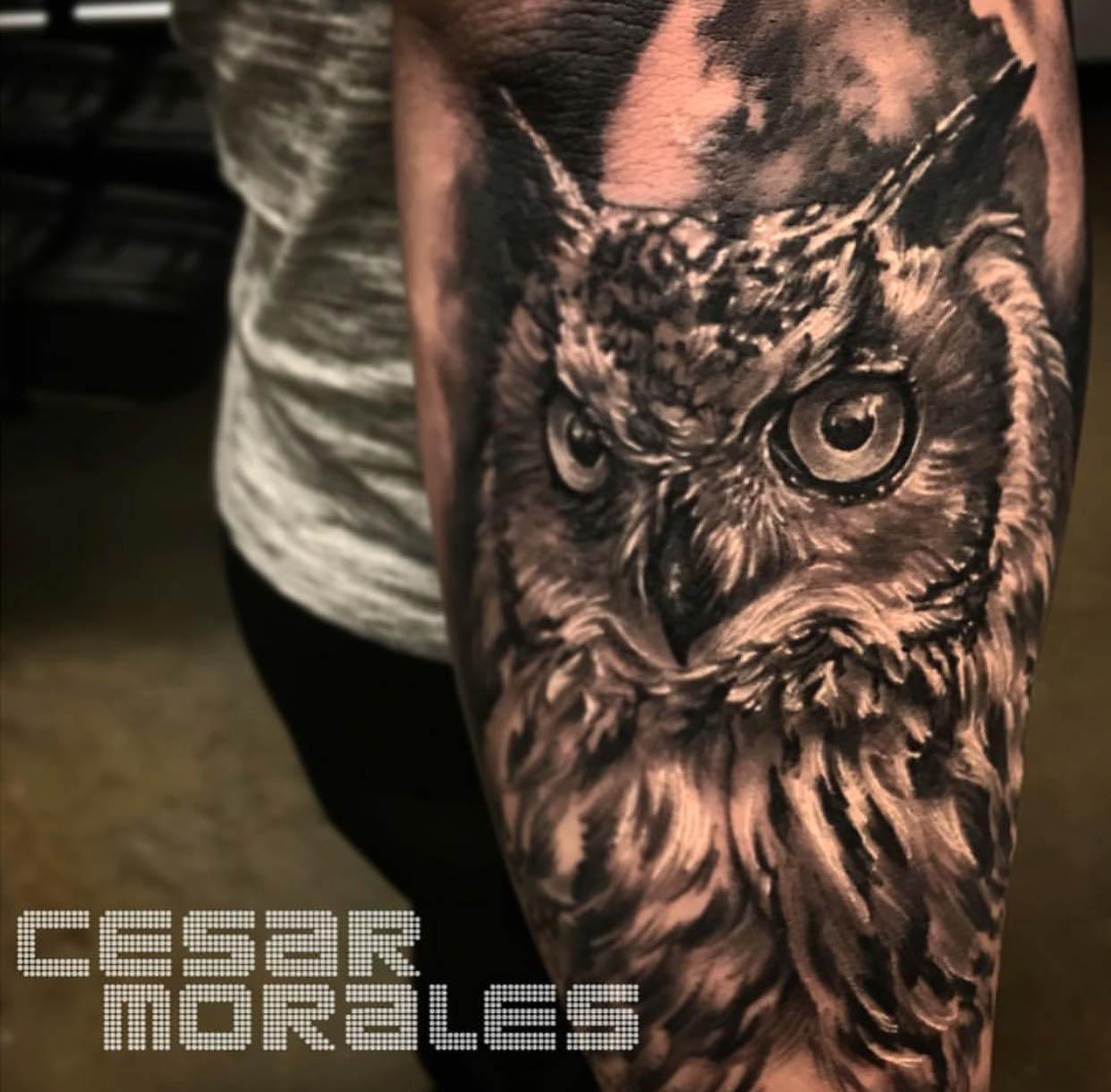 owl cesar