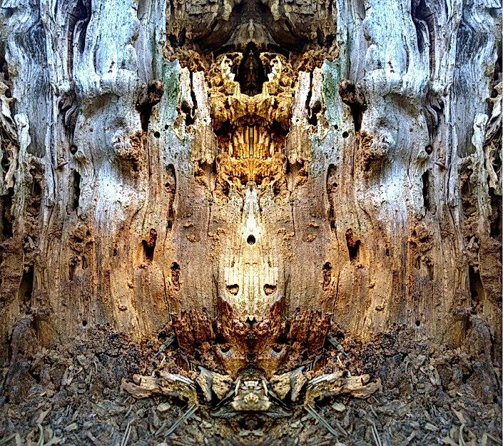 speaking nature - Kopia.jpg