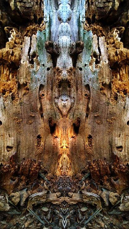 Speaking nature 4.jpg