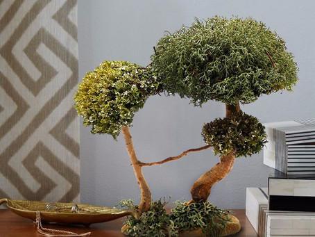 Деревья из цетрарии для офиса или коворкинга