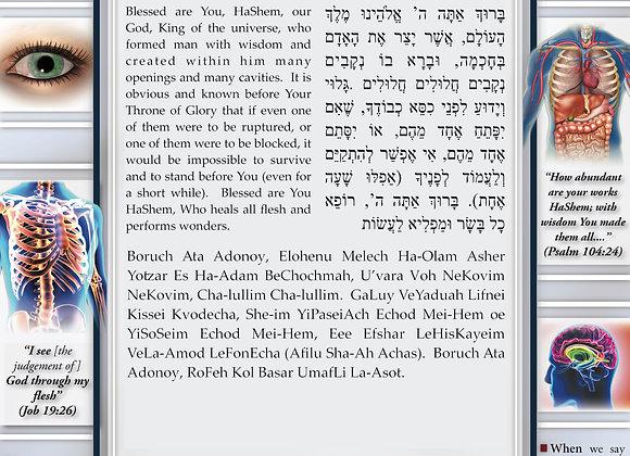 Nusach Ashkenaz Asher Yatzar Posters