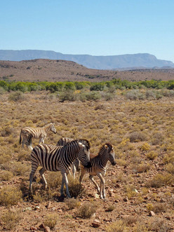 Zebra & child