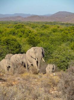 Rising Elephants