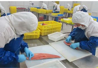 Salmon bone removal