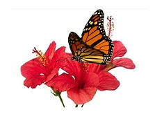 flower and butterfly 4000.jpg